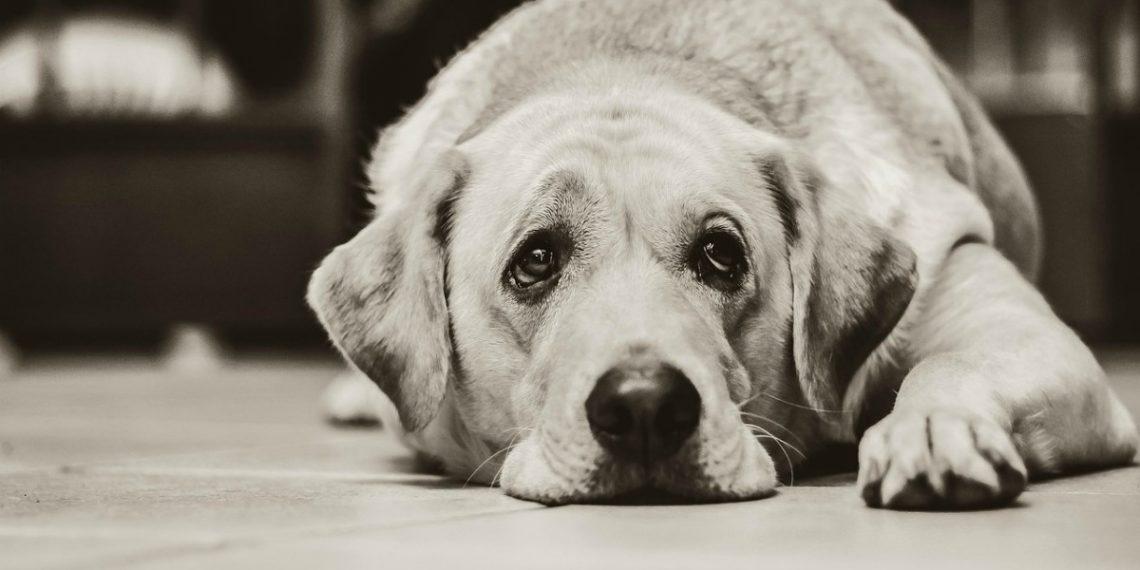 Perros antes de morir