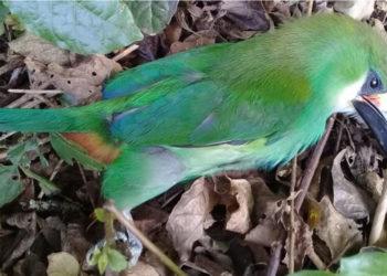 Las aves en México están cayendo muertas por la ola de calor. Foto: Facebook / Marcelino Covarrubias.
