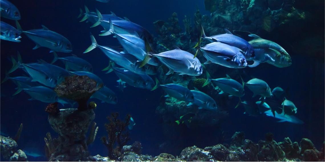 Especies de peces en el océano. Foto: Pixabay.