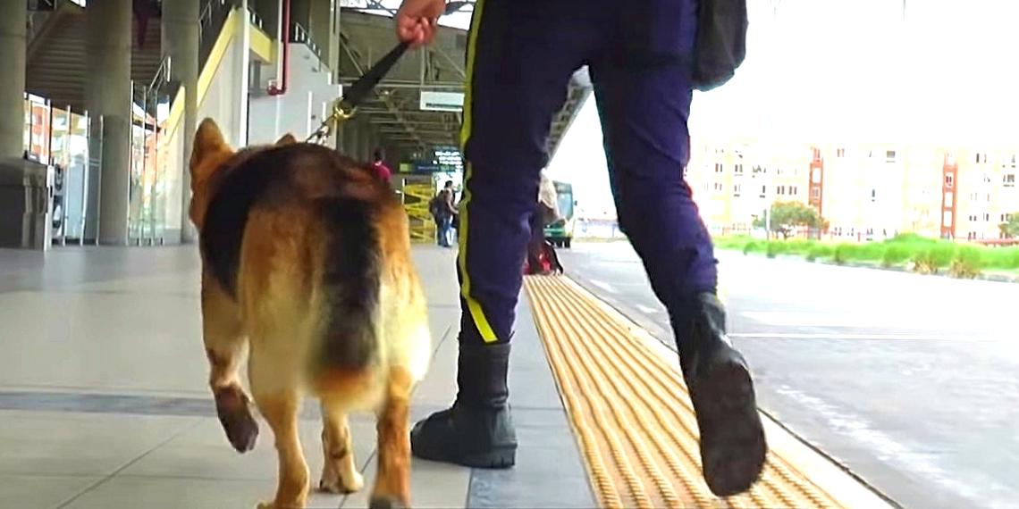 Perro de seguridad en el sistema TransMilenio. Foto: Captura de pantalla.