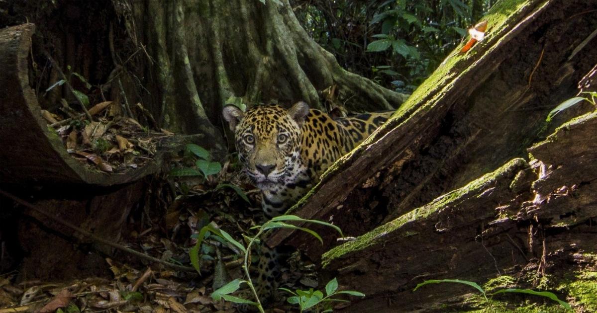 Foto: EFE / WWF