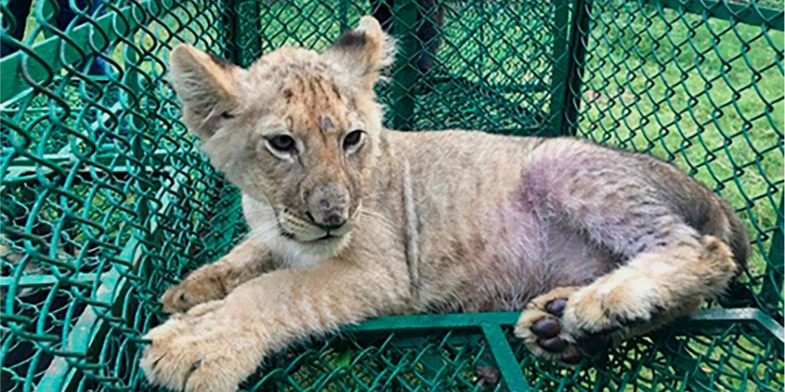 Rescatan a miles de animales en operativo mundial contra el tráfico ilegal de especies
