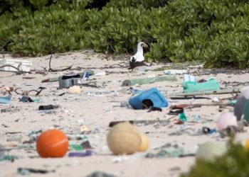 Descubren que la Isla Henderson del Pacífico ha sido arruinada por el plástico