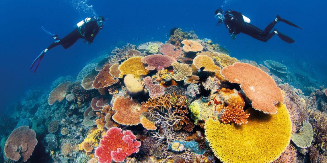 Descubren que las esponjas marinas ayudan a mitigar el cambio climático. Foto: EFE