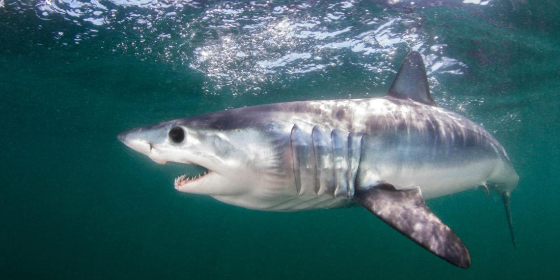 Anuncian acuerdo para proteger a tiburones y rayas en peligro de extinción en el planeta