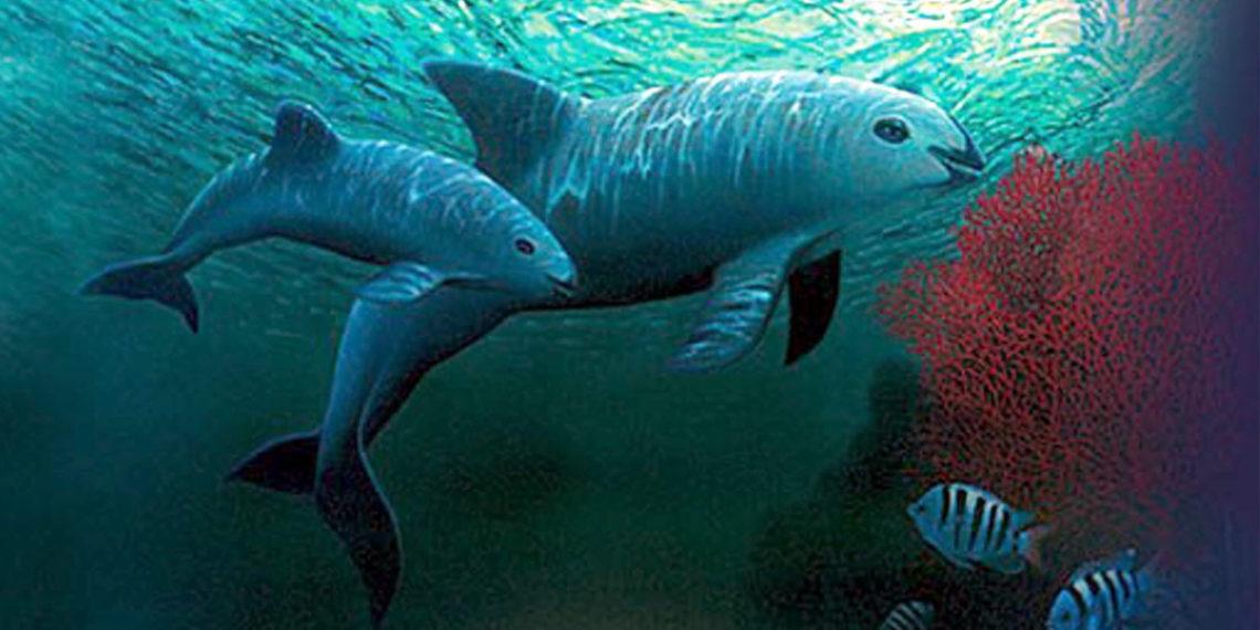 Imagen de referencia de Vaquita marina. Foto: EFE