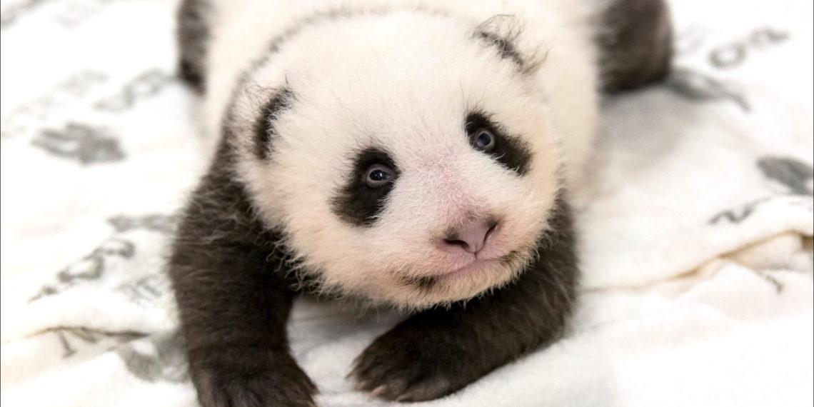 Foto: AP / Zoo de Berlín