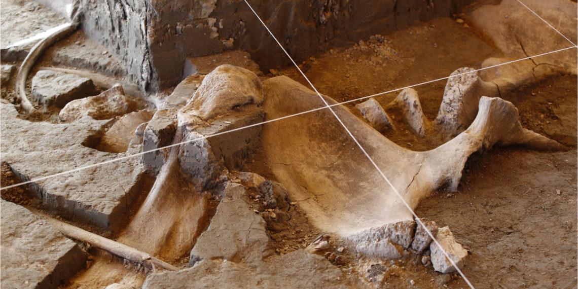 Hallan la primera trampa artificial utilizada para cazar mamuts en México