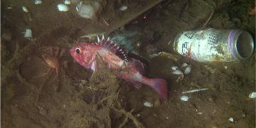 Contaminación de basura en uno de los puntos más profundos del planeta. Foto: EFE