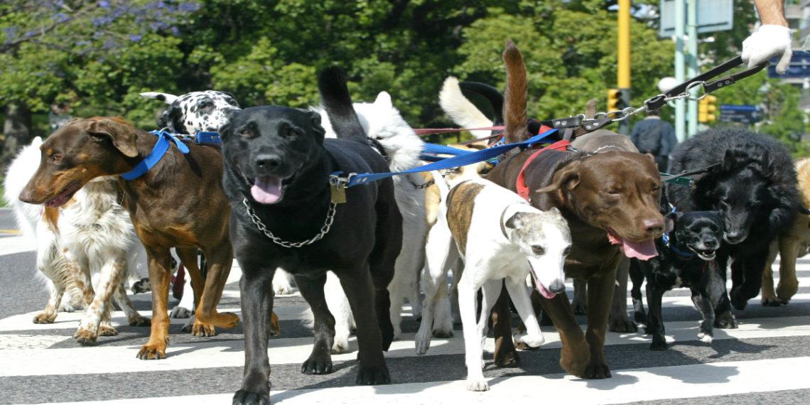 Perros entienden el lenguaje de desconocidos. Foto: EFE