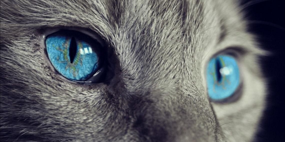 Los impresionantes ojos de un gato. Foto: EFE
