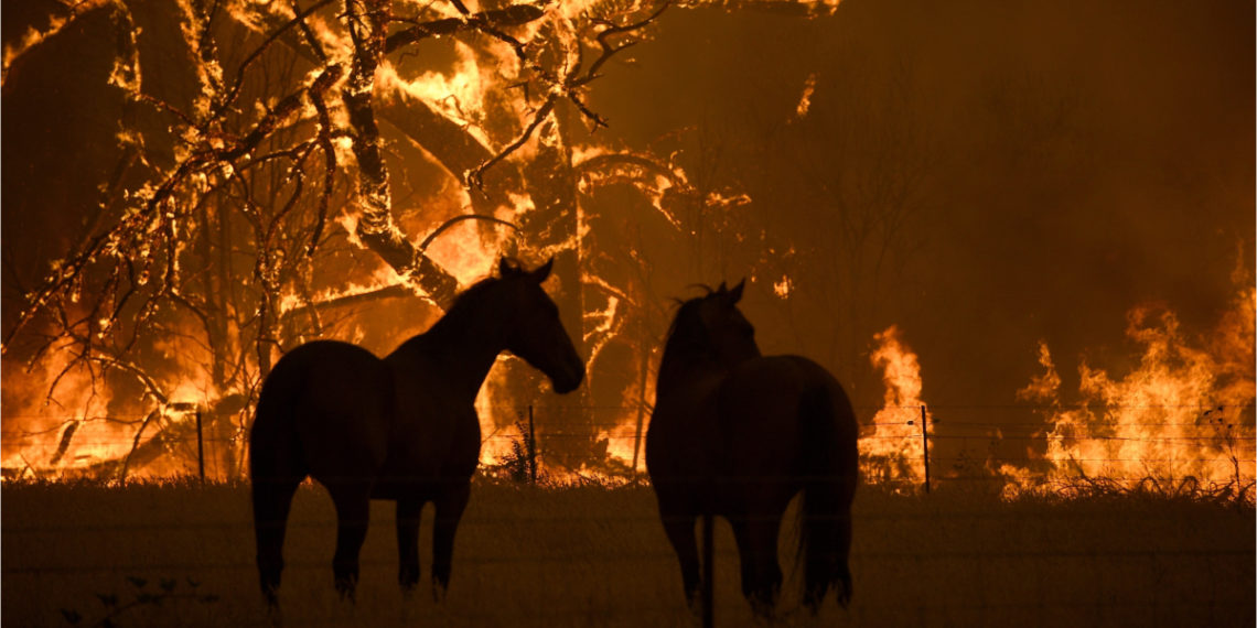 Los graves incendios han consumido miles de hectáreas en Australia. Foto: EFE