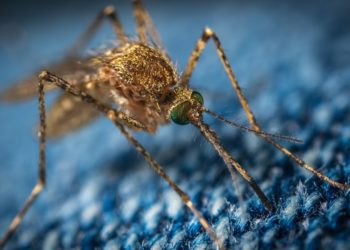 Imagen de referencia de mosquito. Foto: Pixabay