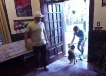 Así recibió el perro de la astronauta en su llegada a casa. América Digital. @Astro_Christina