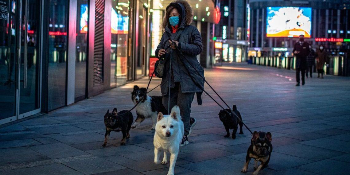 Detectan el que sería el primer caso de coronavirus en un perro en China. Foto: EFE