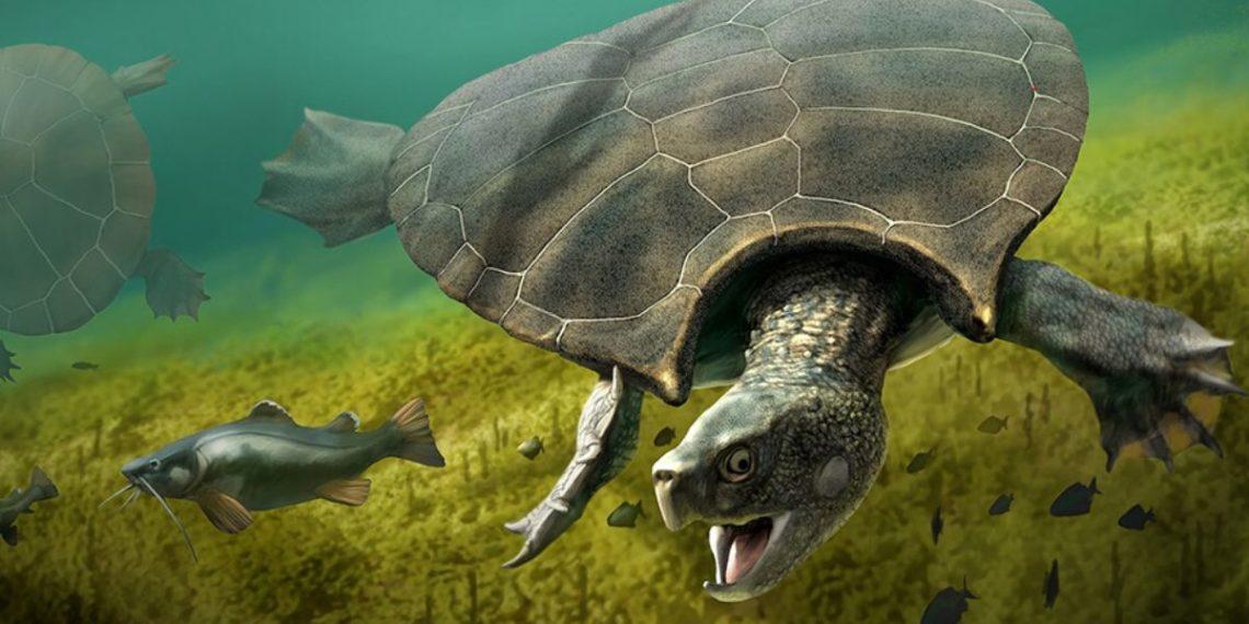 Reconstrucción gráfica de la tortuga gigante Stupendemys Geographicus. Foto: university of zurich
