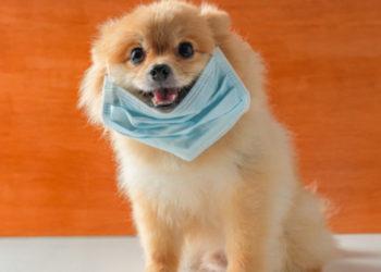 perro diagnosticado con coronavirus