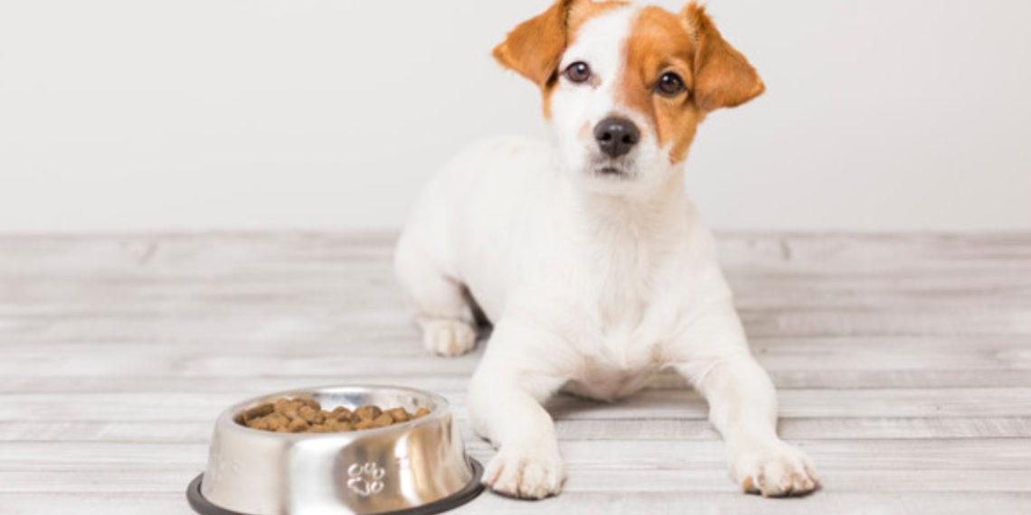 Rachael Ray a través de su compañía donara alimentos a las mascotas