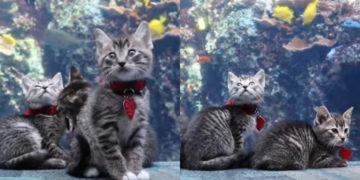 Un grupo de gatitos hacen un recorrido por un acuario en Georgia