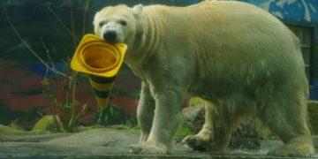 Zoológico alemán tendría que sacrificar algunos animales por coronavirus