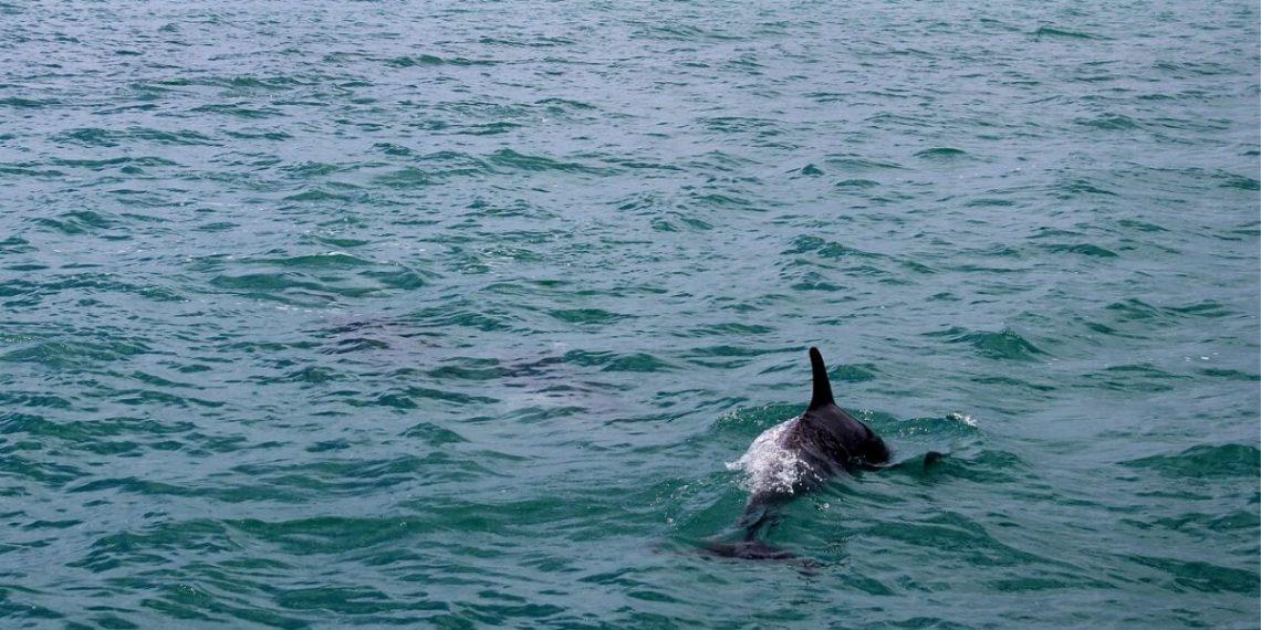 Delfines de Santa Marta en el mar por coronavirus