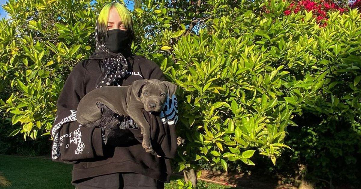 América Digital - Billie Eilish adopta un perro en cuarentena