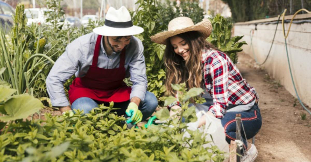 Huerta en casa: lo que necesitas saber antes de empezar una