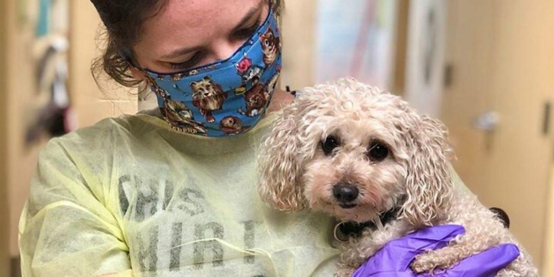 Chehe perra coronavirus