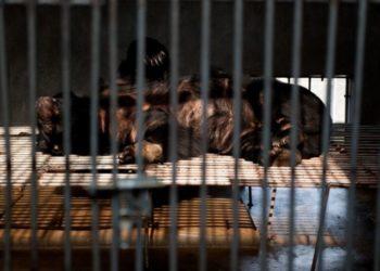 CHINA ANIMALES SALVAJES