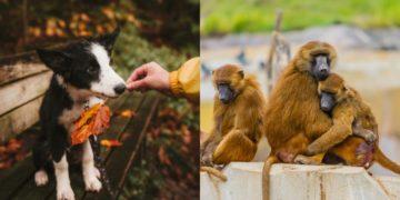 Aprender de los animales