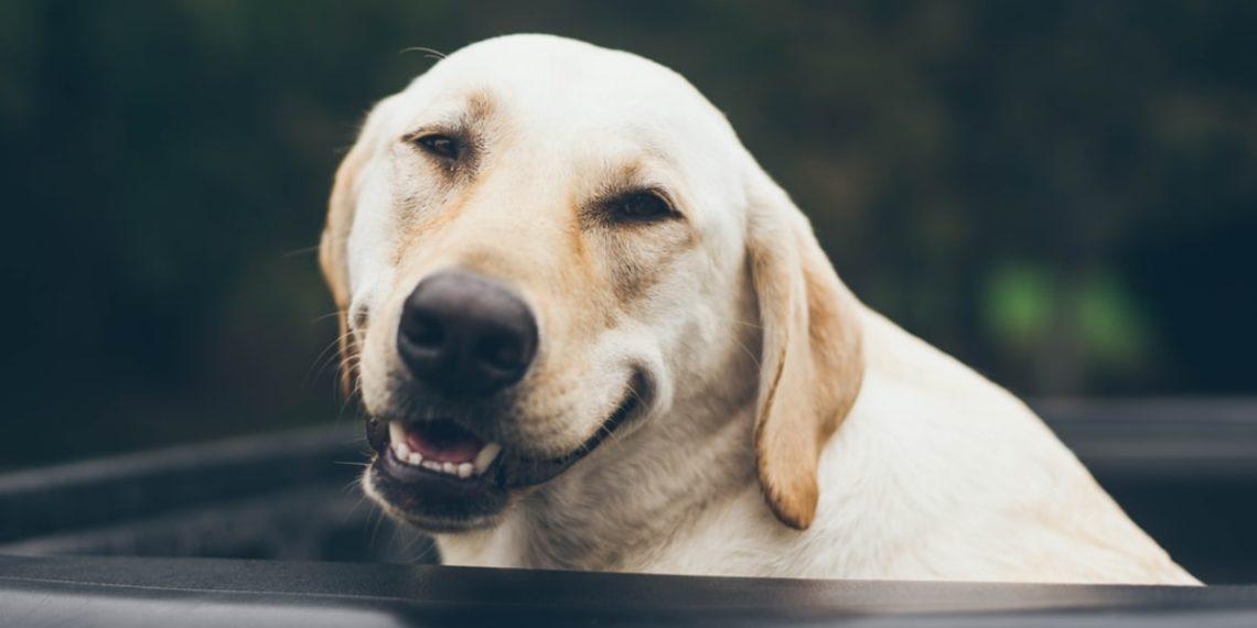perros en la adolescencia