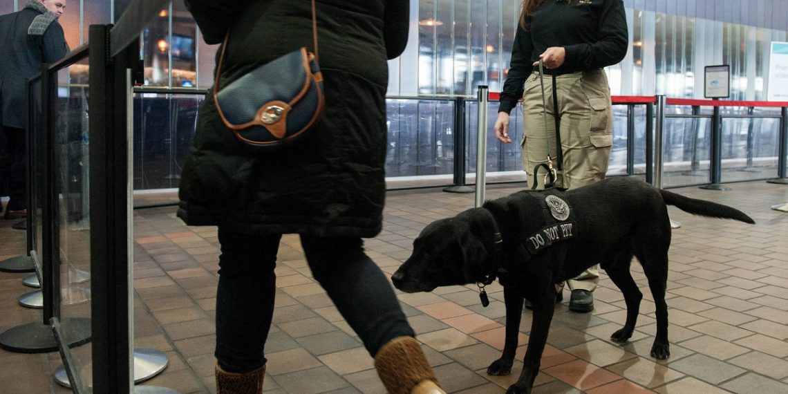 Luz verde a ensayos con perros para detectar COVID-19