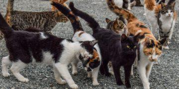 Gatos con coronavirus