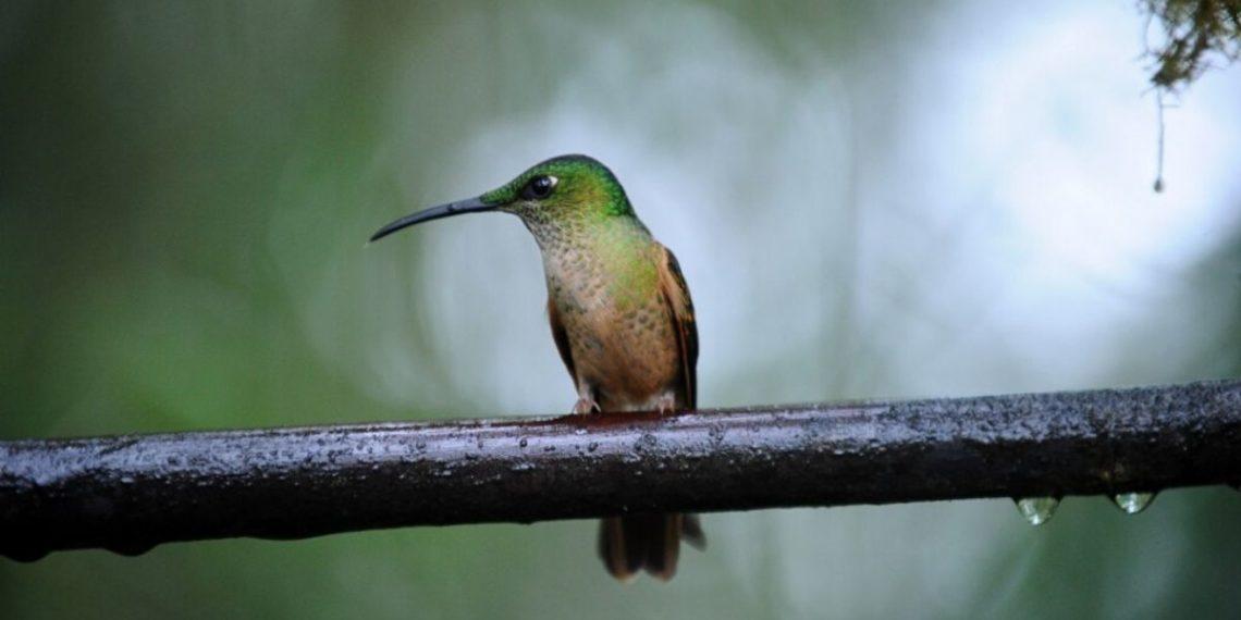 Aves de Colombia