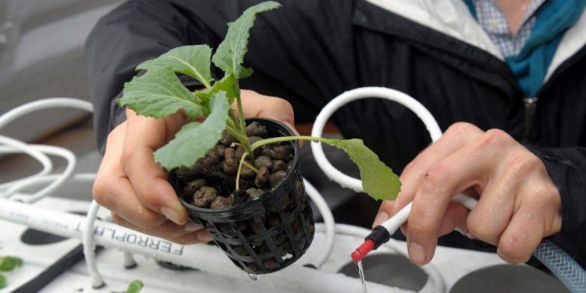 Evolución plantas