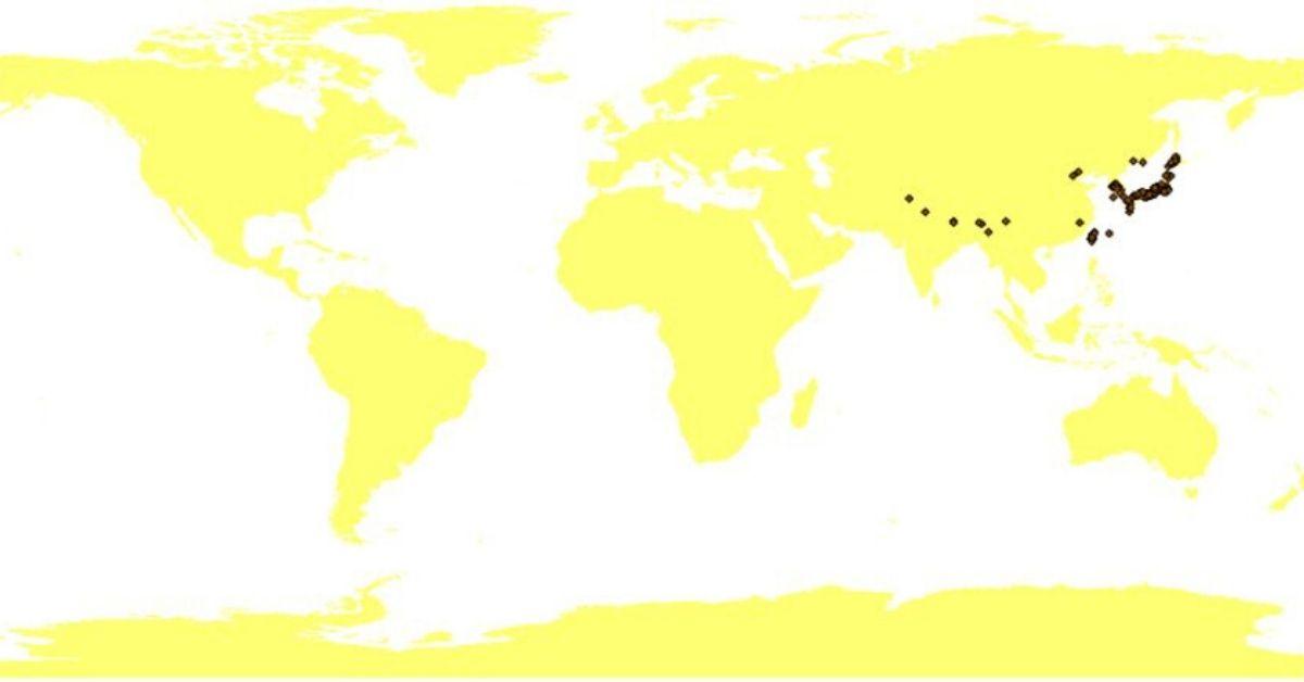 Avispón asiático
