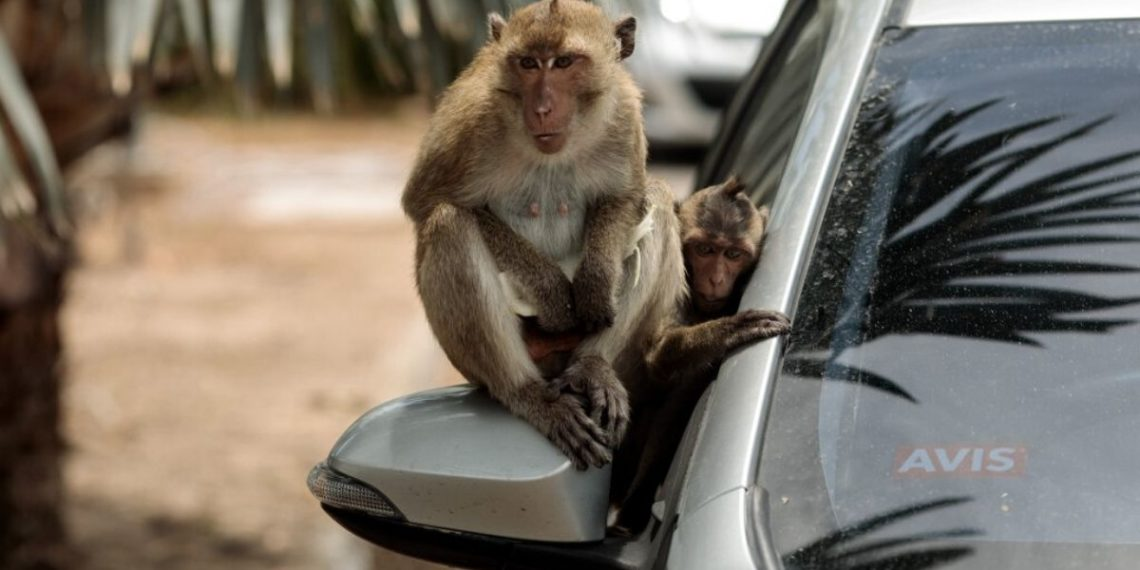 Monos coronavirus