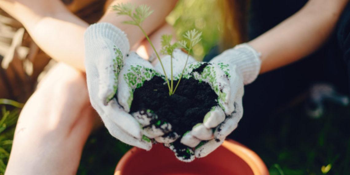 Plantas para la casa. Foto: Freepik