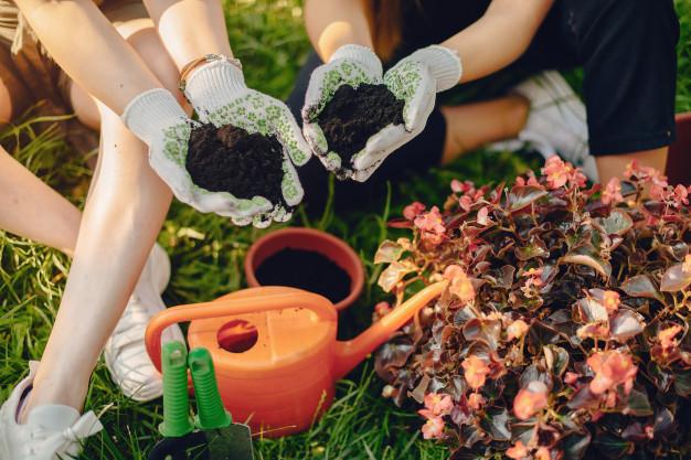 plantar en el hogar