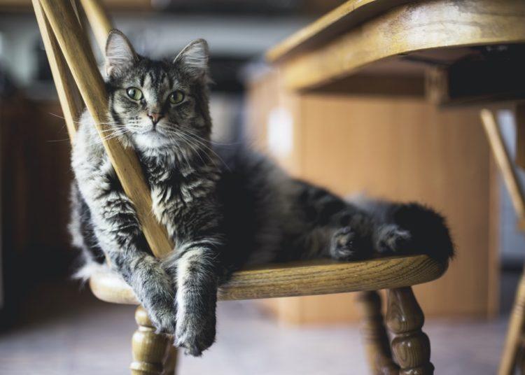 Es bueno tener un gato en casa