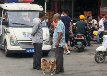 Miles de canes salvados de la 'Fiesta de la carne de perro' gracias al coronavirus en China