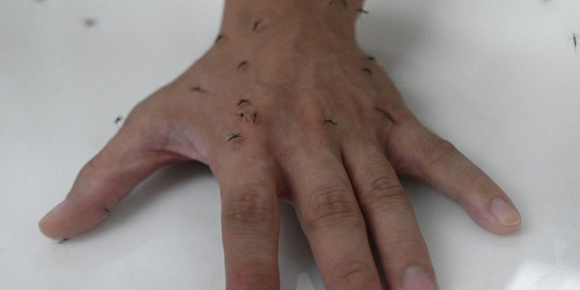 La picadura de mosquito no transmite el coronavirus, según estudio.