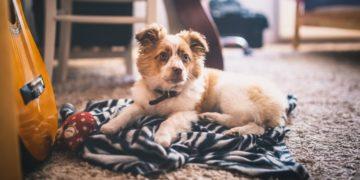 Elimina el olor a perro de casa