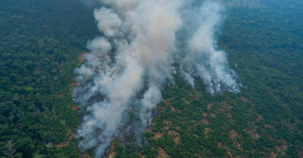 deforestación y los incendios en la Amazonia