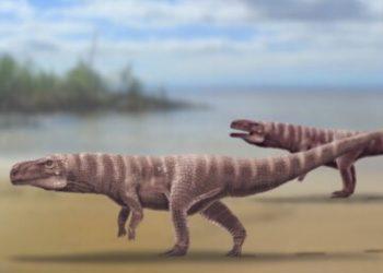 antiguos cocodrilos