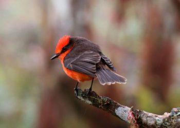 Nacen seis crías de pájaro brujo en las Islas Galápagos. Foto: EFE