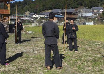 estudios ninja