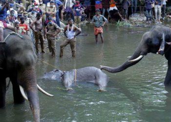 Elefanta India