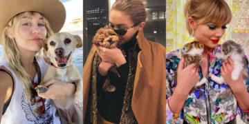 Mascotas consentidas de los famosos. Foto: Instagram: @mileycyrus / @gigihadid / @taylorswift
