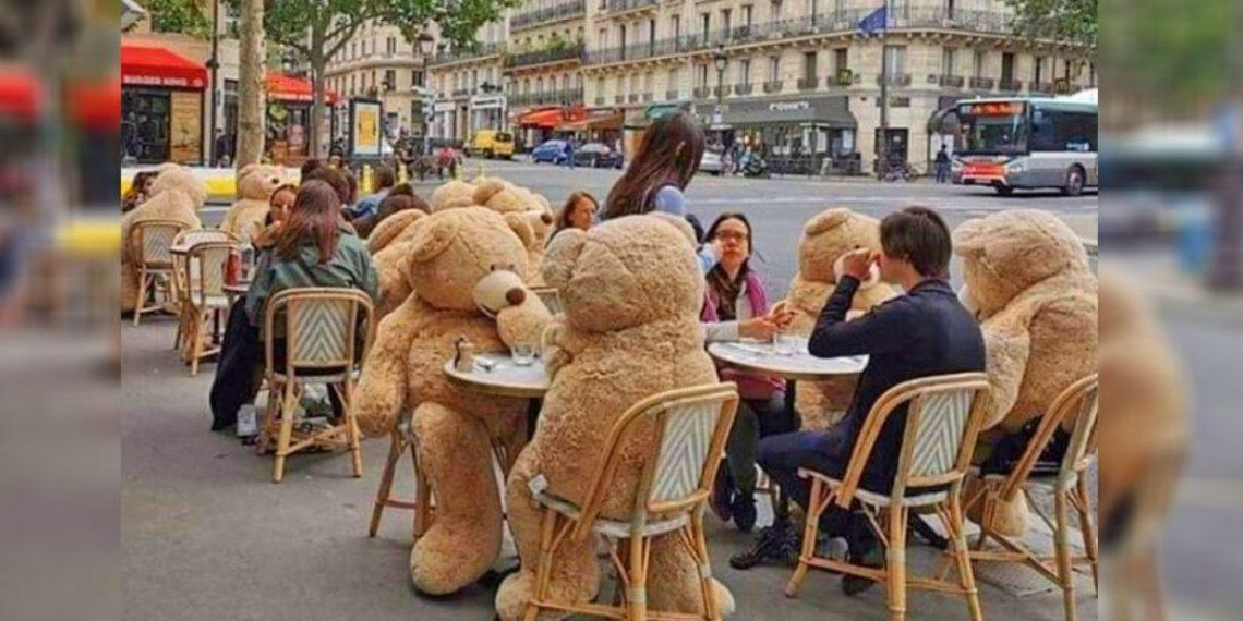 Osos de peluche en Francia